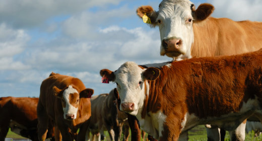 Equipment, Vehicle & Livestock Loans