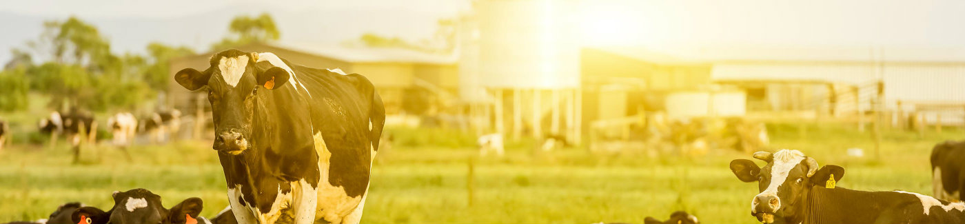 Farm & Livestock Loans