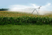 Agriculture Real Estate Loans