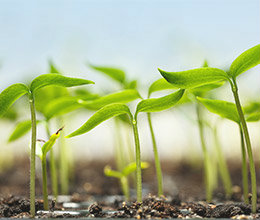 Agribusiness Loans
