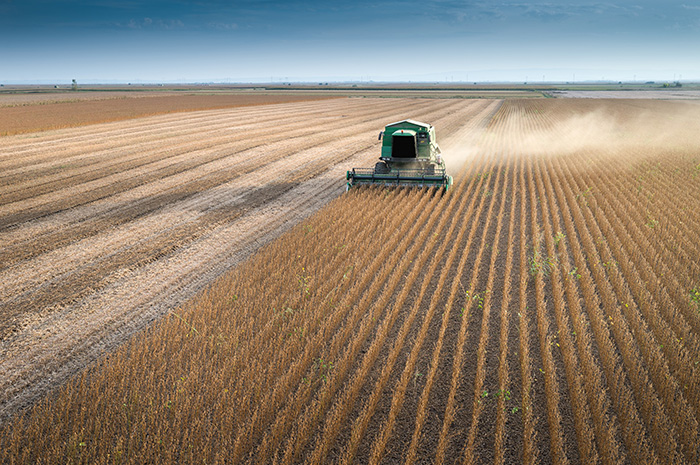 As soybeans pile up, Minnesota farmers eye an end to the trade war