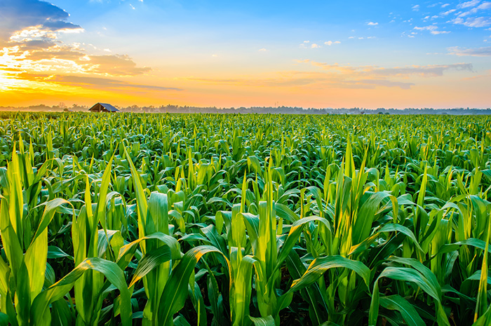 The challenge of managing expenses through low corn markets