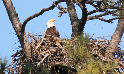 35th Annual Eagle Awareness