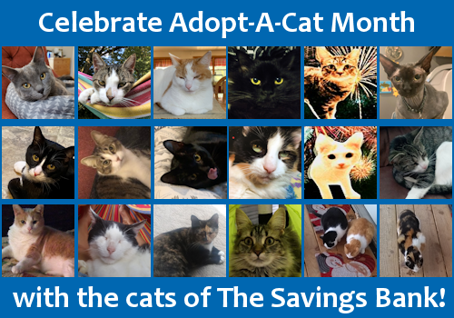 National Adopt-A-Cat Month with the Cats of The Savings Bank!
