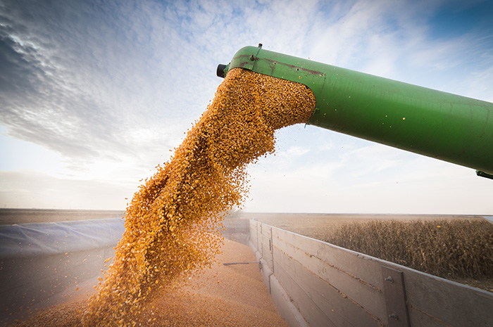 What do corn and soybean futures tell us about the next five years?